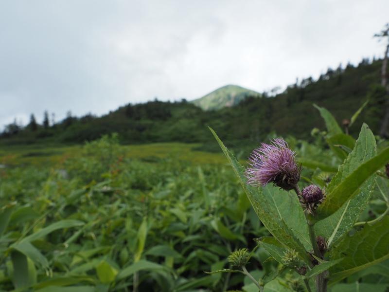 妙高山と火打山2