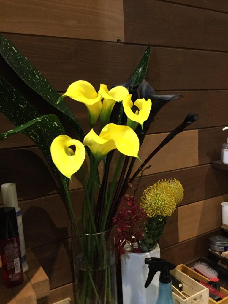 今週の花💐